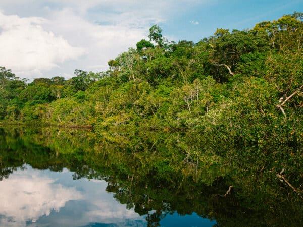 Photo Amazonie