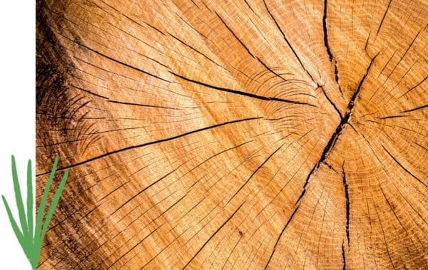 Coupe de tronc d'arbre