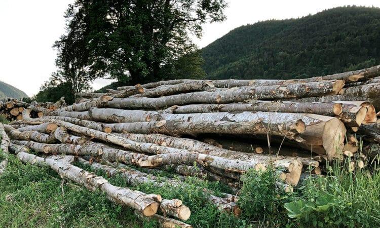 Bois des forêts du Jura